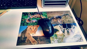mousemat made from postcards